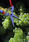 Verband sieht Happy End fürs Weinjahr