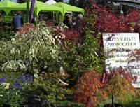 Pflanzenmarkt auf der franz�sischen Rheinseite