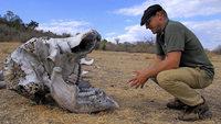 Wegen Elfenbeinhandels sind die Elefantenbest�nde gef�hrdet