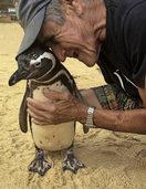 Ein Pinguin bleibt seinem Retter treu