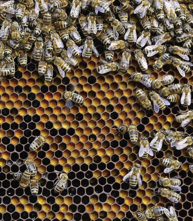 Fleißige Bienchen    Foto: Ingo Schneider