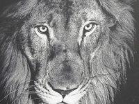 Rohstoffabbau und illegaler Handel gef�hrden Afrikas Tiere
