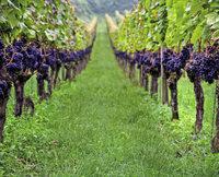 Die Gesichter hinter dem Wein