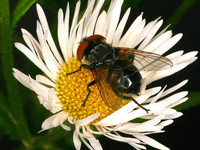 Zahl der Insekten geht dramatisch zur�ck