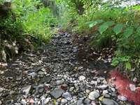Fischsterben: Neunaugenbach schon wieder ohne Wasser