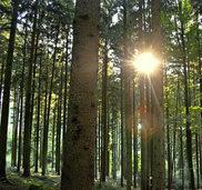 Gemeindewald soll 2017 guten Erl�s bringen