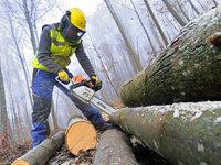 Kartellamt funkt bei Holzvermarktung dazwischen
