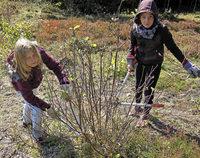 Pflege von Landschaft und Gruppe