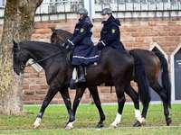 Eins�tze der Reiterstaffel sorgen f�r mehr Austausch mit B�rgern
