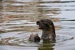 Fotos: Eine Otterfamilie vergn�gt sich am Strand in Singapur
