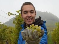 Sch�ler mit Behinderung helfen bei der Weinlese mit
