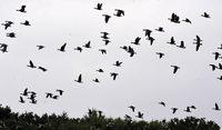 Vogelz�hler m�ssen geduldig sein