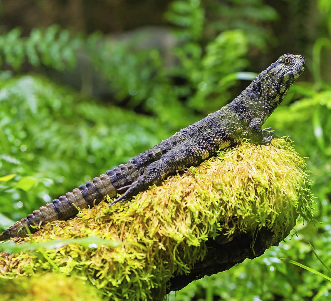 basel reptilien und amphibien verziehen sich badische. Black Bedroom Furniture Sets. Home Design Ideas