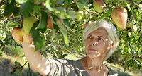 Suche nach dem verlorenen Apfel