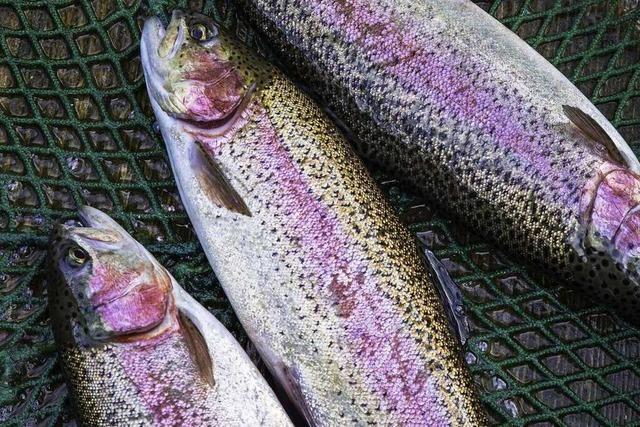 Vom Teich auf den Tisch – Frische Forellen vom Eulersbacher Hof