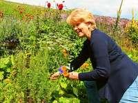 18 Frauen bauen Kräuter für eine Teemanufaktur an