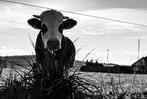 Fotos: Licht und Schatten auf dem Schauinsland