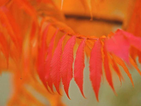 Farbexplosion der Natur