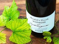 Endinger Weingut Schneider setzt auf viel Zeit