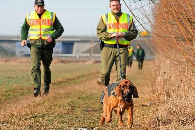 Menschliche Spuren: Wie Spürhunde als Mantrailer ausgebildet werden