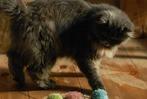Fotos: Das Katzencafé in Kandern