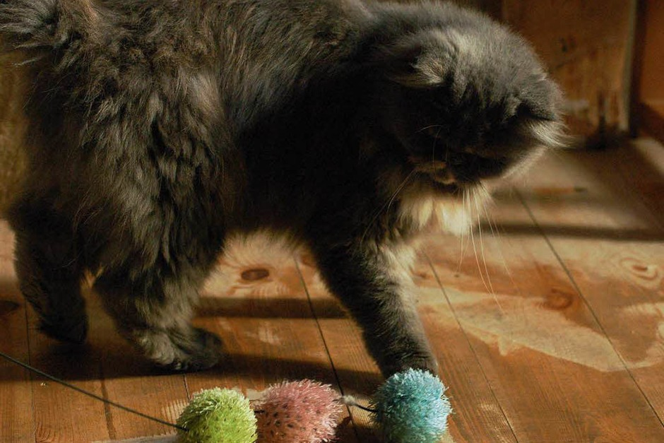 Katzenliebhaber können sich im Kanderner Katzencafé austauschen – und nebenbei noch einen Kaffee trinken und ein Stück Kuchen essen. (Foto: Tamara Keller)