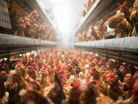 Landwirte in der Region bleiben bislang von der Vogelgrippe verschont