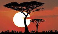 """""""Afrika ist kein Zoo, da ist nichts planbar"""""""