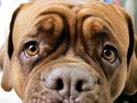 Kurioser Vorfall: Hunde rasen mit Bistrotisch durch Freiburg