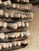 Waldbesitzer schlagen weniger Holz