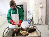 Vogelgrippe erreicht nie gekanntes Ausmaß in Deutschland