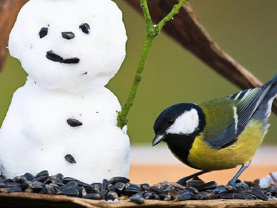 tipps v gel f ttern im winter und zwar richtig m llheim badische zeitung. Black Bedroom Furniture Sets. Home Design Ideas