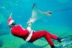 Fotos: Tierische Weihnachten im Zoo
