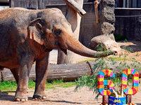 Shanti, zweitältester Elefant Deutschlands, ist tot