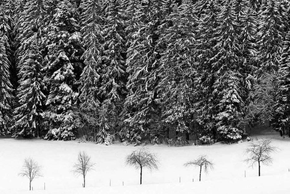 Joseph Carlson sieht den Schwarzwald mit anderen Augen. Der Fotograf und Bildkünstler hat ein Bildband herausgegeben, der die Region in Schwarz-Weiß in Szene setzt. (Foto: Joseph Carlson)