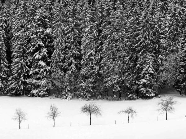 Joseph Carlson sieht den Schwarzwald mit anderen Augen. Der Fotograf und Bildkünstler hat ein Bildband herausgegeben, der die Region in Schwarz-Weiß in Szene setzt.