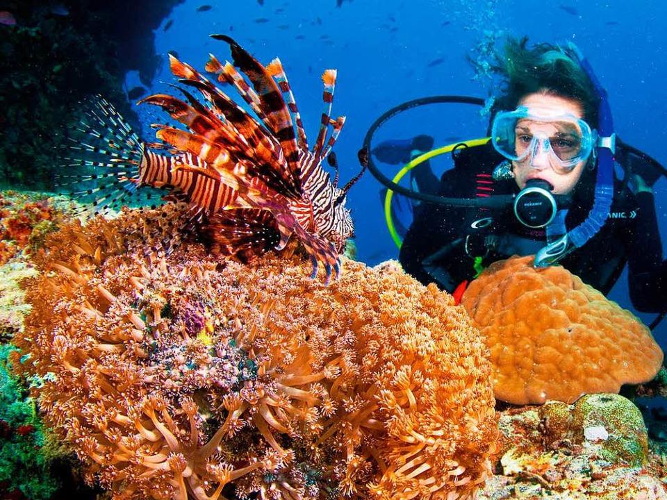 Gesunde Korallen leuchten in den unterschiedlichsten Farben.  | Foto: Tourism Queensland