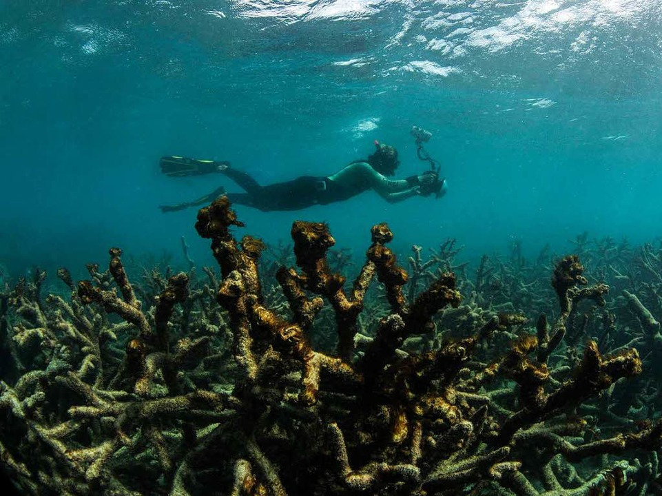 Ein totes Riff...  | Foto: Xl Catlin Seaview Survey