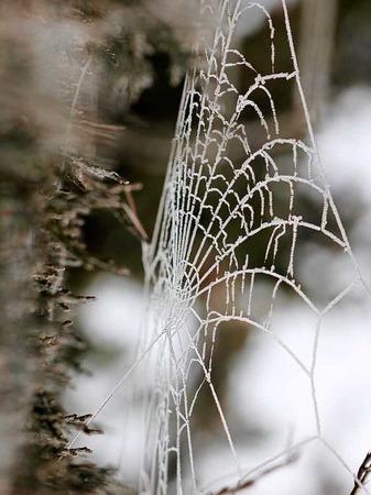 Dieses Spinnennetz entdeckte Monika Danner in Kirchhofen.