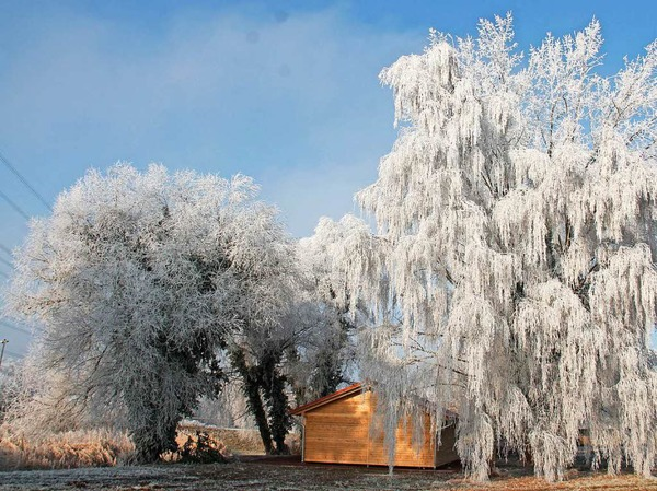 Die mit Raureif bedeckten Bäume mit der neuen Schutzhütte am Baggersee bei Wittenweier am sonnigen Neujahrstag 2017.