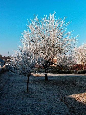 Winterliche Grüße schickte Michael Reichenbach aus Gundelfingen der BZ.