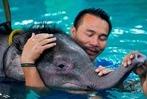 Fotos: Elefantenbaby in Thailand bekommt Hydrotherapie