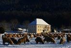 Fotos: Winter im Dreisamtal und auf dem Schauinsland