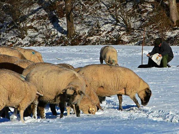 Winterimpressionen - festgehalten von BZ-Lersern im Dreisamtal und in den frühen Morgenstunden auf dem Schauinsland.