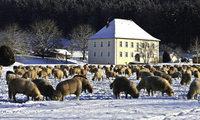 Winter im Dreisamtal