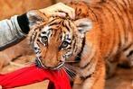 Fotos: Zirkusfamilie zieht Tigerkind auf
