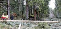 Sturmholz beschert Geldsegen