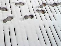 Fußspuren im Schnee führen Polizei zu Einbrechern