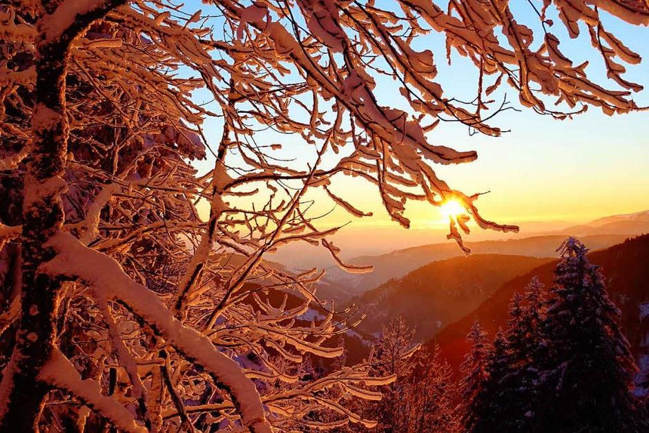 Winterzauber im Schwarzwald: der verschneite Feldberg. (Foto: Paul G. Wiesenberg)