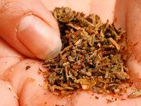 Zöllner finden bei Eimeldingen herrenlosen Drogenkoffer